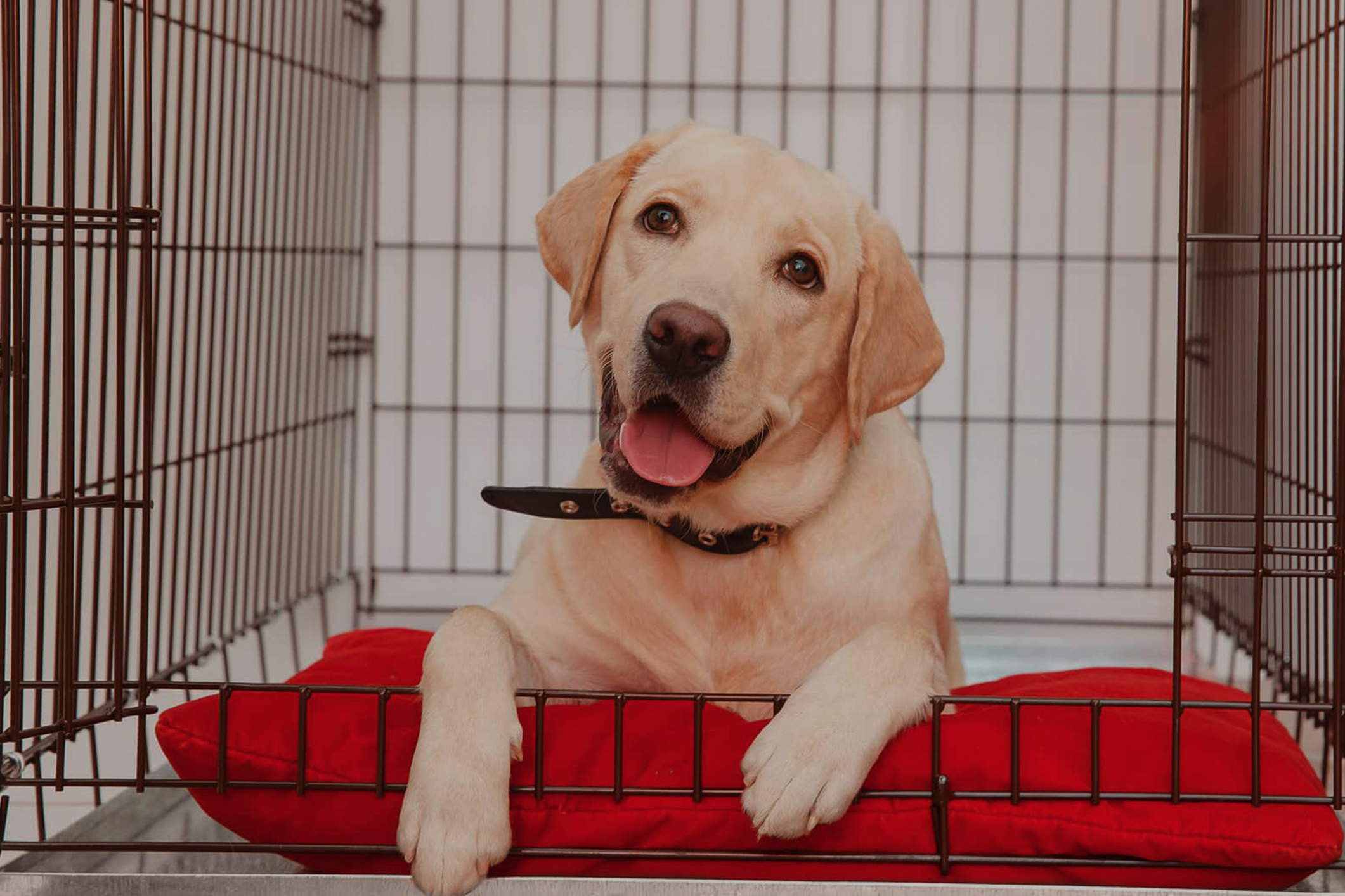 Top 7 Dog Crates To Buy This Year